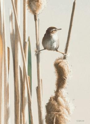 Karnet B6 z kopertą Spring! Marsh Wren - Museums & Galleries - Książki Kalendarze, gadżety i akcesoria