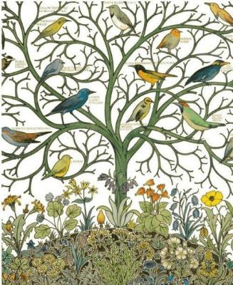 Karnet 17x14 z kopertą Birds of Many Climes textil - Museums & Galleries - Książki Kalendarze, gadżety i akcesoria