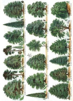 Karnet B6 z kopertą Our British Forest Trees - Museums & Galleries - Książki Kalendarze, gadżety i akcesoria